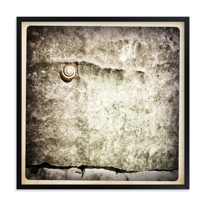 """Spiral Shell"" - Art Print by Margaret Hine in beautiful frame options and a variety of sizes."