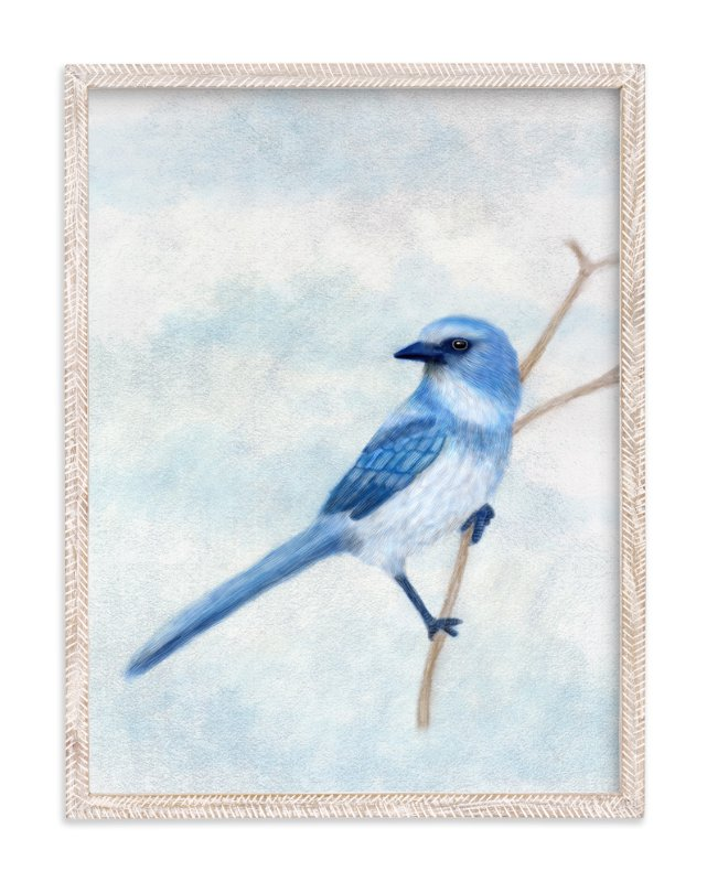 """""""Scrub Jay"""" - Art Print by iamtanya in beautiful frame options and a variety of sizes."""