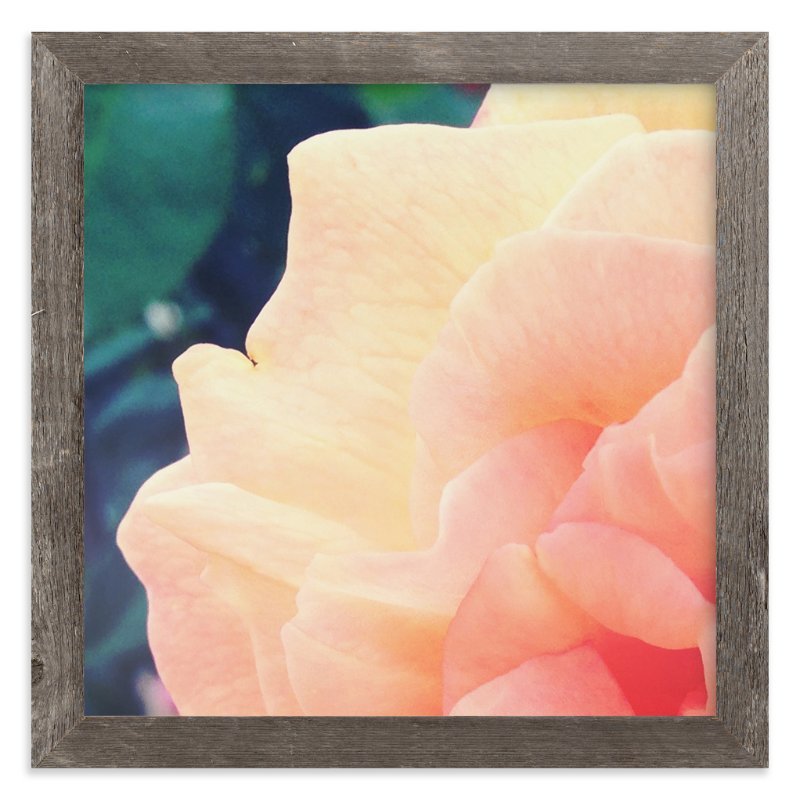 """sherbet rose"" - Art Print by Niki Digrigorio in beautiful frame options and a variety of sizes."