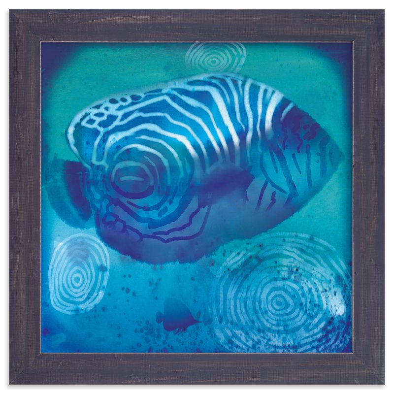 """Sea Angelfish"" - Art Print by Tracy Ann in beautiful frame options and a variety of sizes."