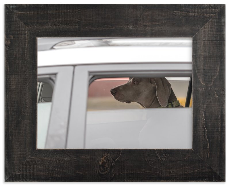 """dog"" - Art Print by Gail Schechter in beautiful frame options and a variety of sizes."