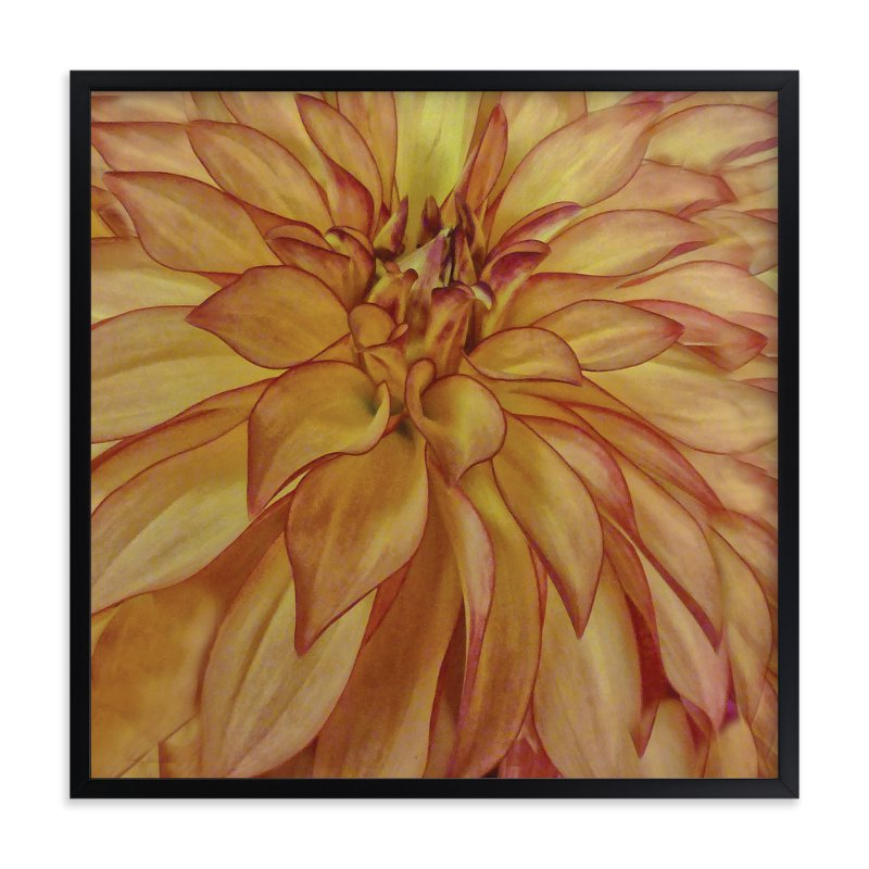 """""""Orange Tip Dahlia"""" - Art Print by Mazing Designs in beautiful frame options and a variety of sizes."""