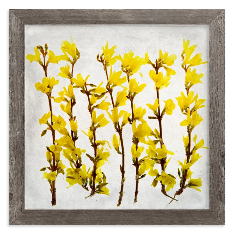 """""""Forsythia"""" - Limited Edition Art Print by Qing Ji in beautiful frame options and a variety of sizes."""