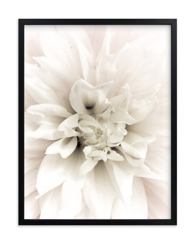 """""""Soft Dahlia Study 1"""" - Art Print by Julie Blackwood in beautiful frame options and a variety of sizes."""