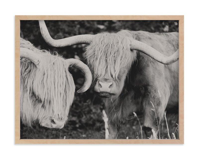 """Highland Cows"" - Art Print by Amy Carroll in beautiful frame options and a variety of sizes."