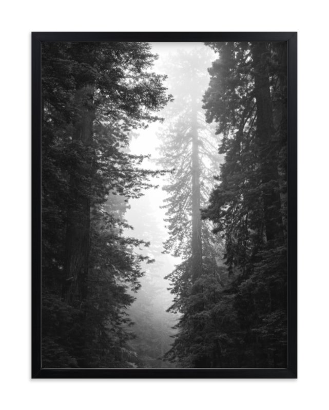 """""""Redwood Morning"""" - Art Print by Kamala Nahas in beautiful frame options and a variety of sizes."""