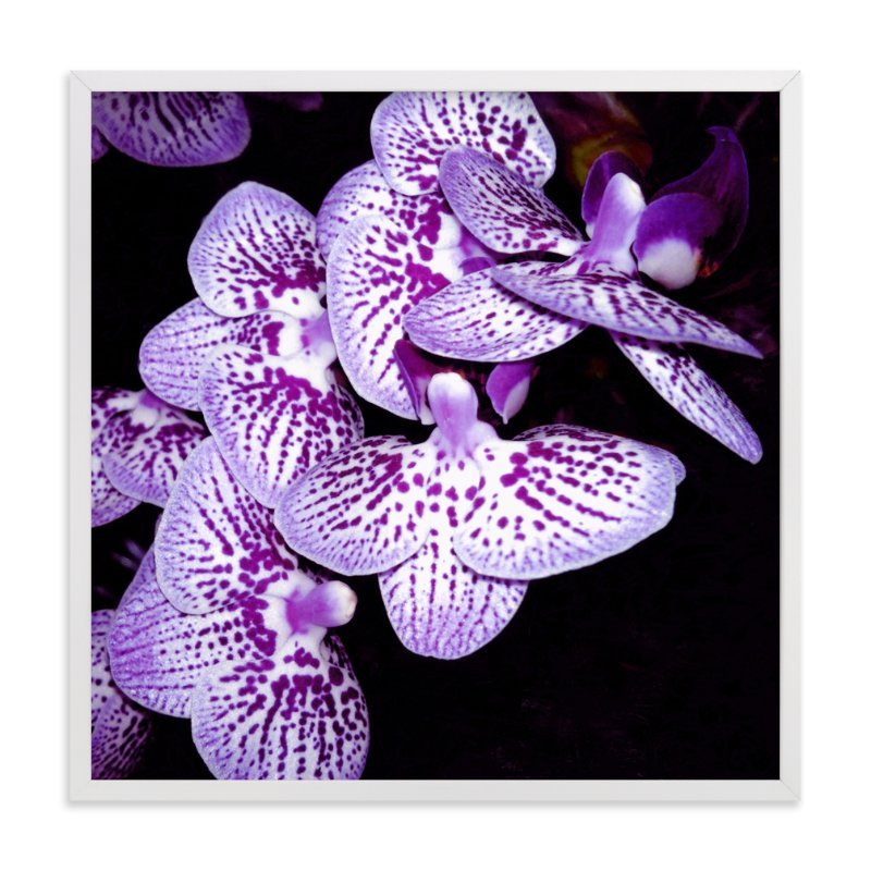 """Elegant Orchid"" - Art Print by Me Amelia in beautiful frame options and a variety of sizes."
