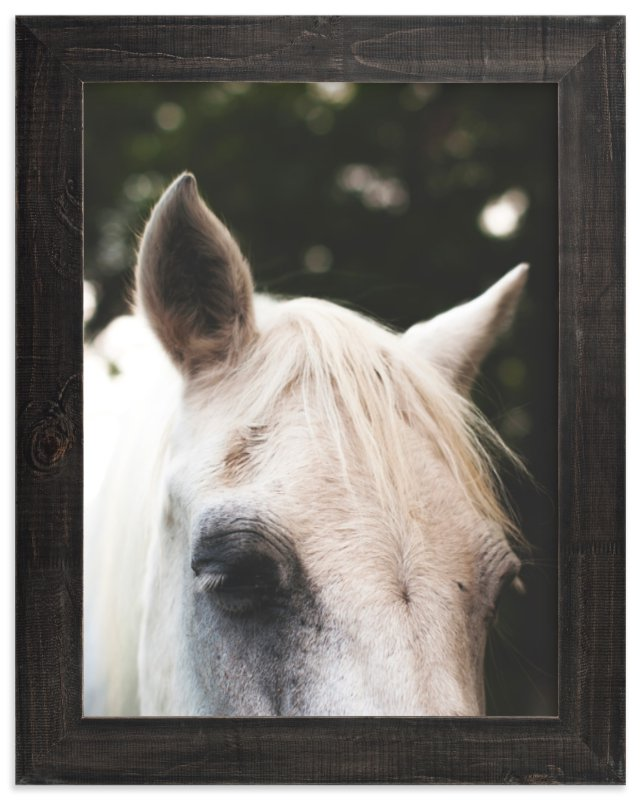 """Quiet Pony"" - Art Print by Pamela Steiner in beautiful frame options and a variety of sizes."