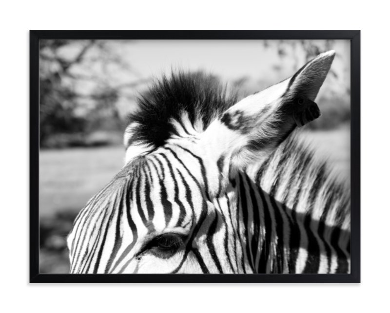 """Zebra"" - Art Print by Basil Design Studio in beautiful frame options and a variety of sizes."