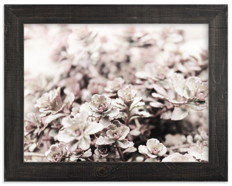 """Stonecrop"" - Art Print by Karen Kaul in beautiful frame options and a variety of sizes."