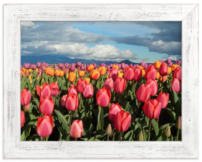 """Tulip Gardens"" - Art Print by Jan Kessel in beautiful frame options and a variety of sizes."