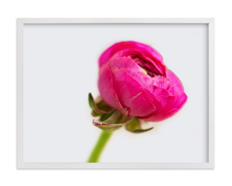 """Budding Ranunculus 2"" - Art Print by Jessica Marchetti in beautiful frame options and a variety of sizes."