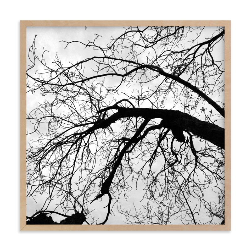 """Branching Out"" - Art Print by Becky Nimoy in beautiful frame options and a variety of sizes."