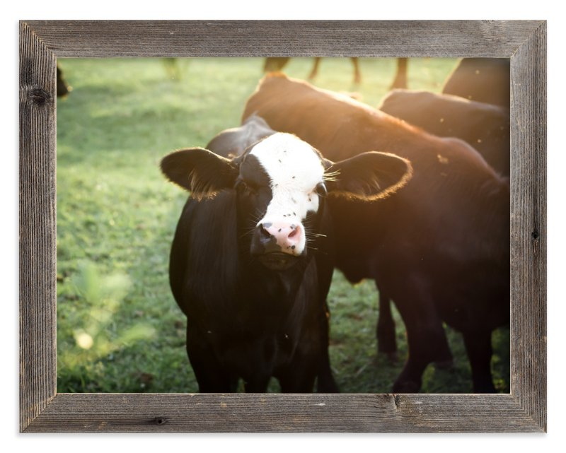 """""""Curious Calf"""" - Art Print by Sara Curtis in beautiful frame options and a variety of sizes."""