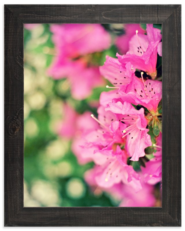 """Azaleas"" - Art Print by Catherine Culvenor in beautiful frame options and a variety of sizes."