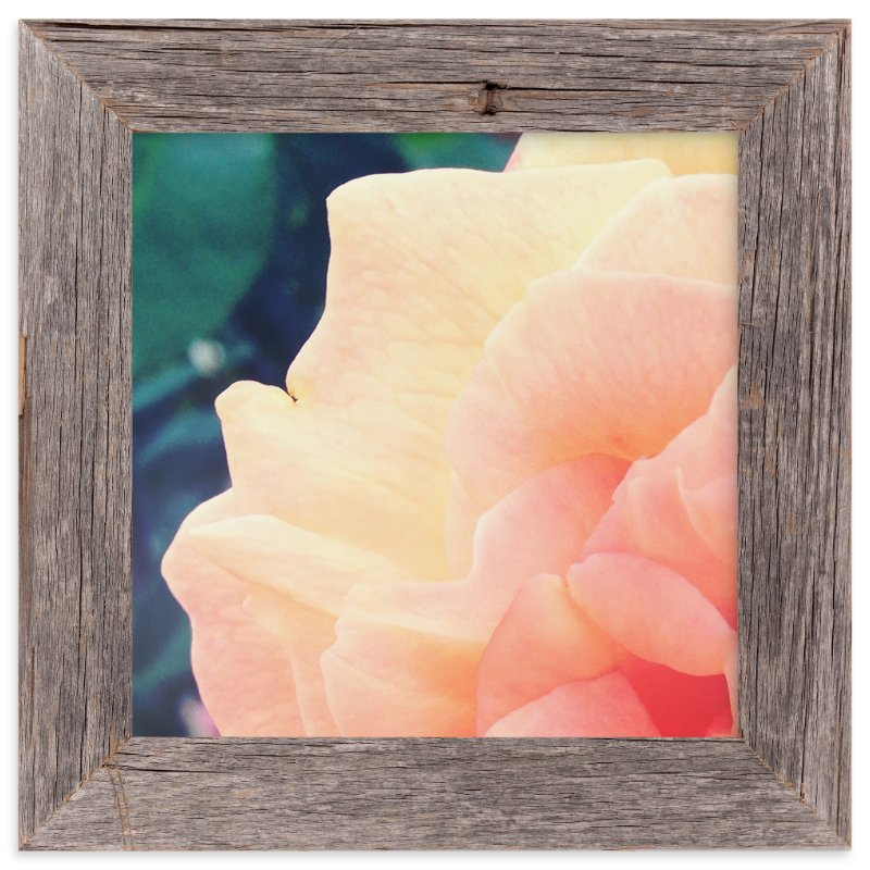 """""""sherbet rose"""" - Art Print by Niki Digrigorio in beautiful frame options and a variety of sizes."""
