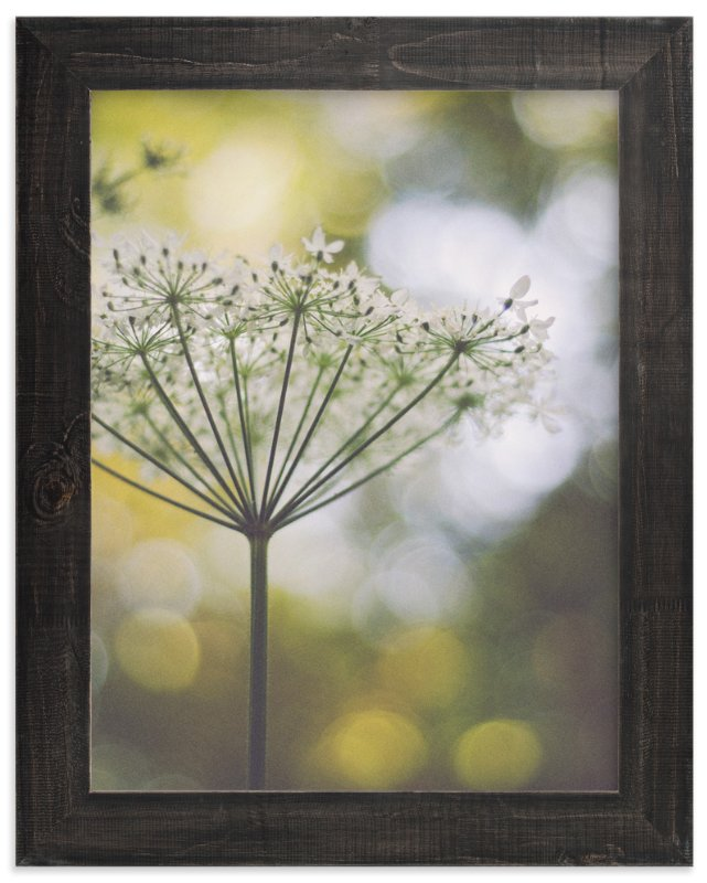 """wild flower one"" - Art Print by Stacy Cooke in beautiful frame options and a variety of sizes."