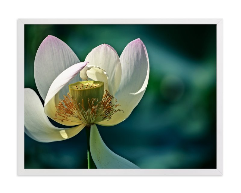 """Lotus No. 1 - Hello"" - Art Print by Qing Ji in beautiful frame options and a variety of sizes."