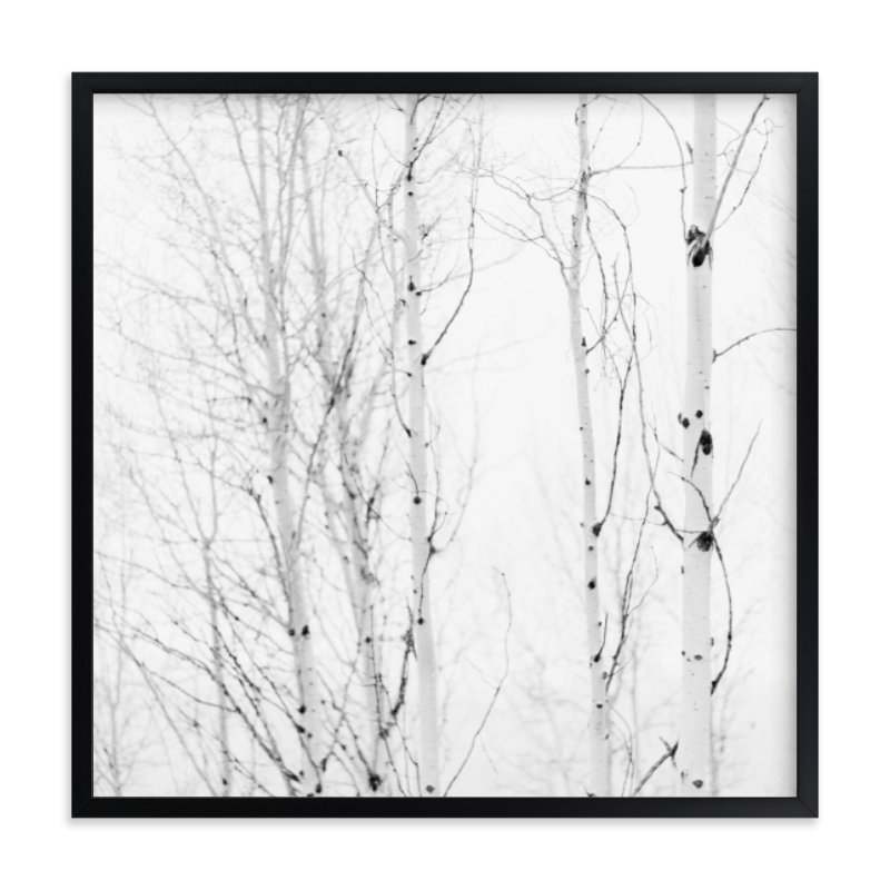 """""""White Aspens"""" - Art Print by Jessica Cardelucci Nugent in beautiful frame options and a variety of sizes."""