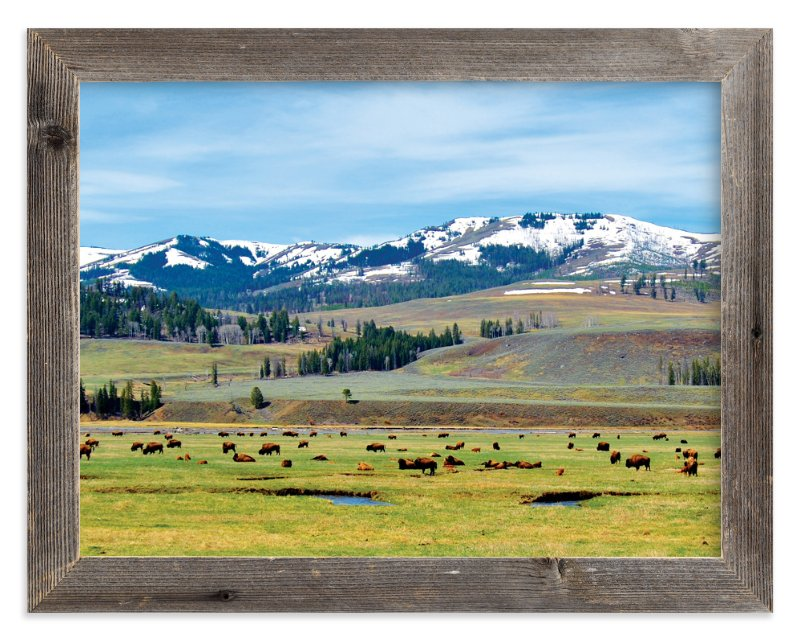 """""""American Bison"""" - Art Print by Abby Niziol in beautiful frame options and a variety of sizes."""