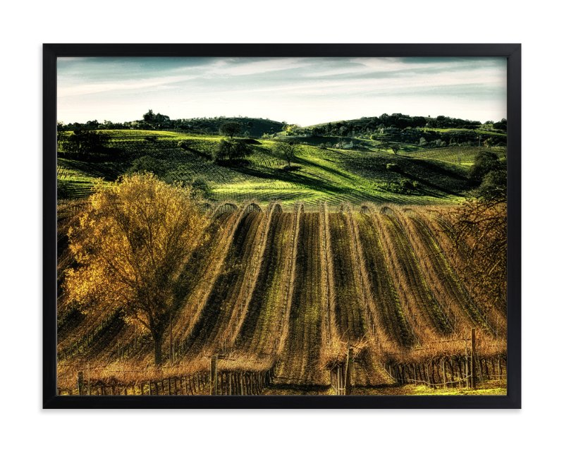 """Paso Robles Vineyard"" - Art Print by Michelee Scott in beautiful frame options and a variety of sizes."