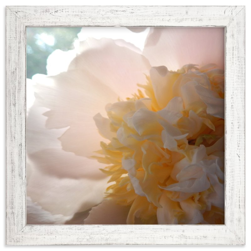 """Morning Peony"" - Limited Edition Art Print by Jan Kessel in beautiful frame options and a variety of sizes."