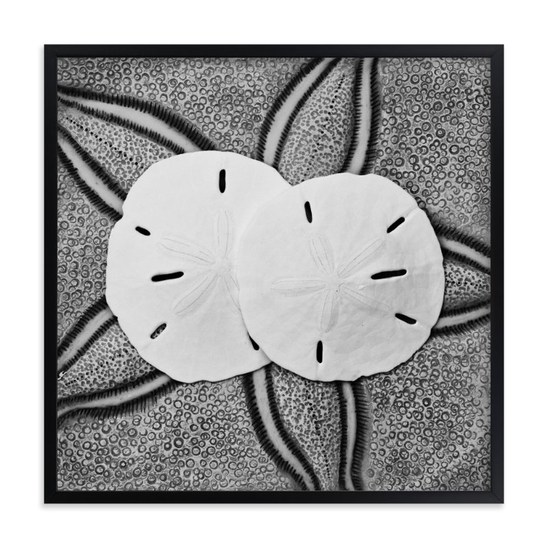 """Sand Dollar Shells"" - Art Print by Debra Butler in beautiful frame options and a variety of sizes."