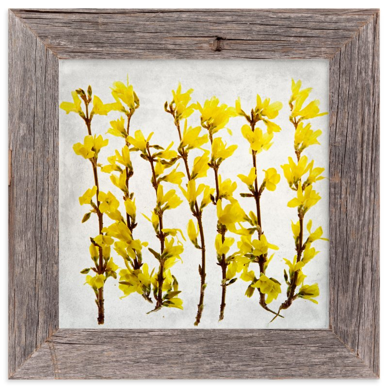 """""""Forsythia"""" - Art Print by Qing Ji in beautiful frame options and a variety of sizes."""