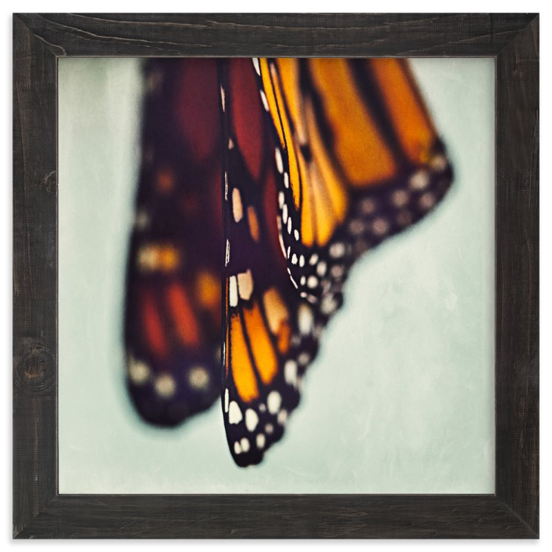 """Monarch Study #5"" - Art Print by Stacy Kron in beautiful frame options and a variety of sizes."