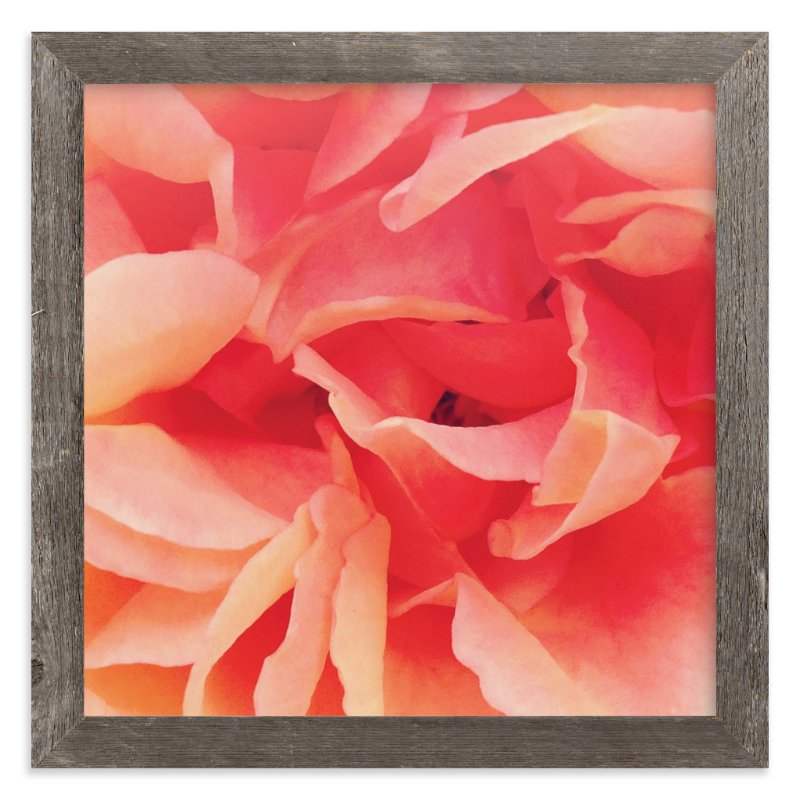 """""""sherbet rose 2"""" - Art Print by Niki Digrigorio in beautiful frame options and a variety of sizes."""