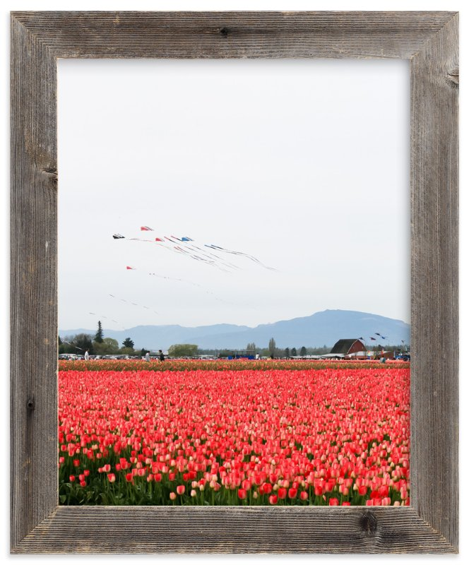 """Kites in a Tulip Field"" - Art Print by Sara Curtis in beautiful frame options and a variety of sizes."