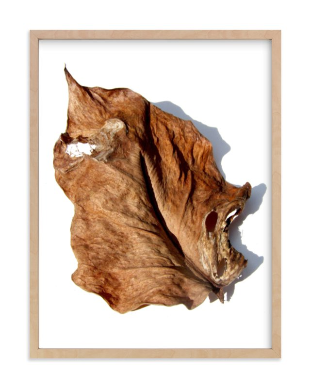 """Brown Leaf Study #1"" - Art Print by Jonathan Brooks in beautiful frame options and a variety of sizes."