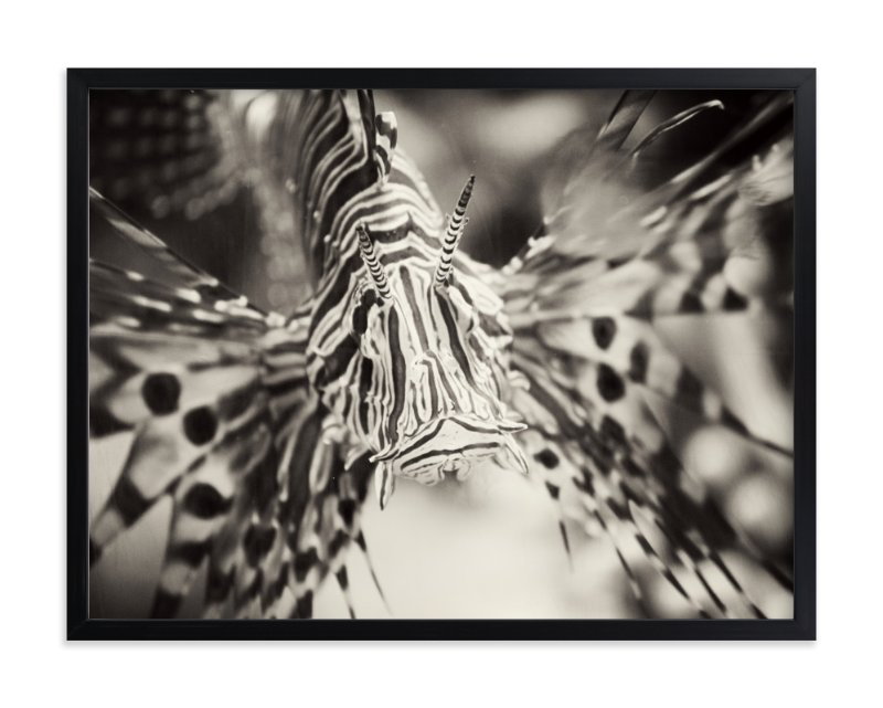 """Lionfish"" - Art Print by Sara Heilwagen in beautiful frame options and a variety of sizes."