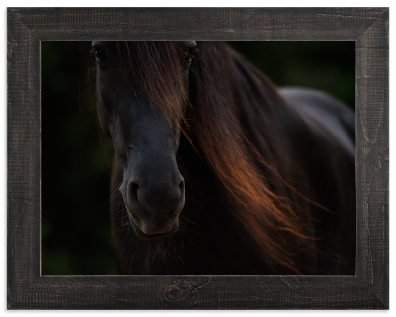 """""""Rocinante"""" - Art Print by Amy Carroll in beautiful frame options and a variety of sizes."""