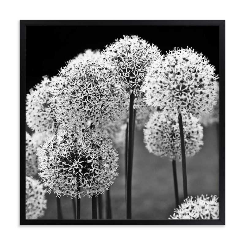 """""""Allium Afletunense"""" - Art Print by Jason Derck in beautiful frame options and a variety of sizes."""