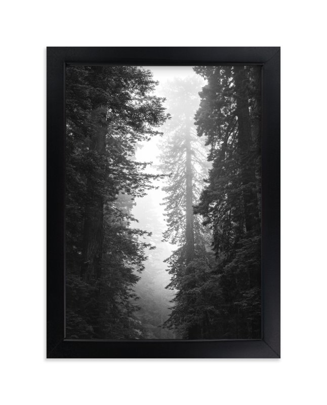 """Redwood Morning"" - Art Print by Kamala Nahas in beautiful frame options and a variety of sizes."