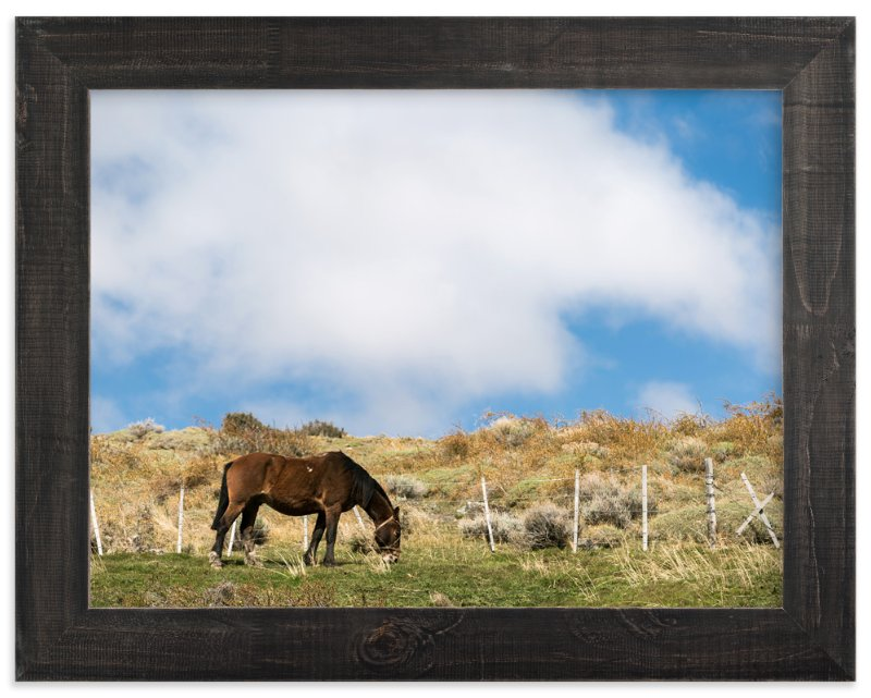 """""""Guacho's Horse"""" - Art Print by Jason Derck in beautiful frame options and a variety of sizes."""