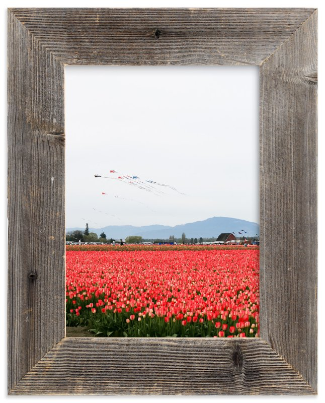 """""""Kites in a Tulip Field"""" - Art Print by Sara Curtis in beautiful frame options and a variety of sizes."""