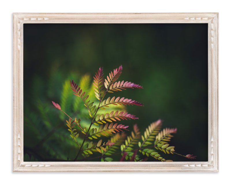"""Roaring red"" - Art Print by Kim Dillon in beautiful frame options and a variety of sizes."