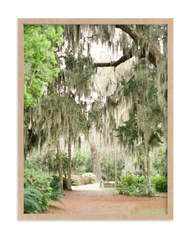 Spanish Moss Wall Art Prints By Lindsay Madden | Minted