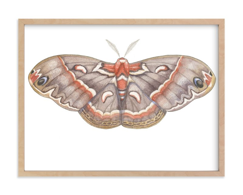 """""""Silk Moth"""" - Art Print by Natalie Groves in beautiful frame options and a variety of sizes."""