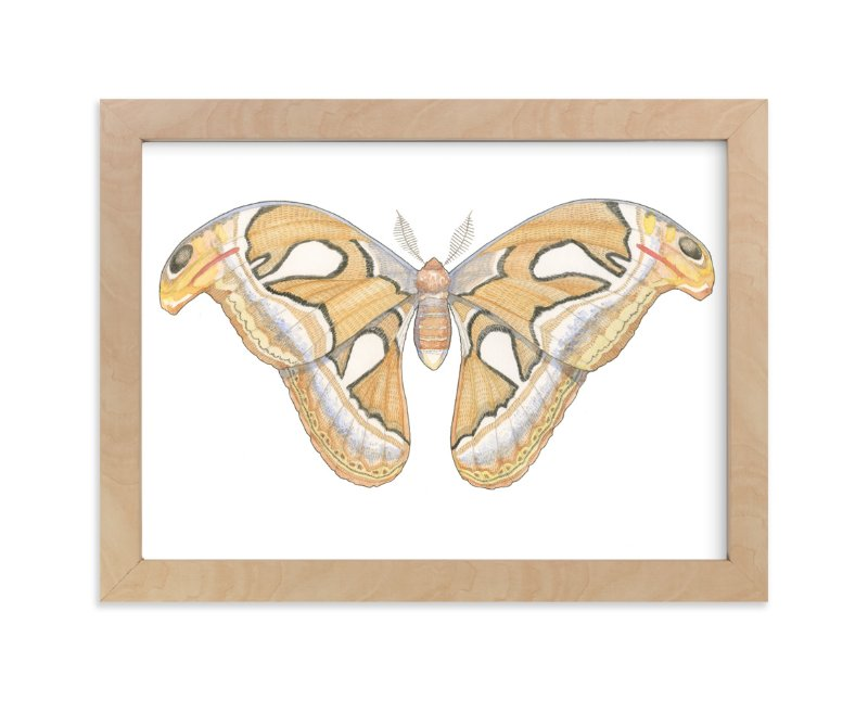 """""""Atlas Moth"""" - Art Print by Natalie Groves in beautiful frame options and a variety of sizes."""
