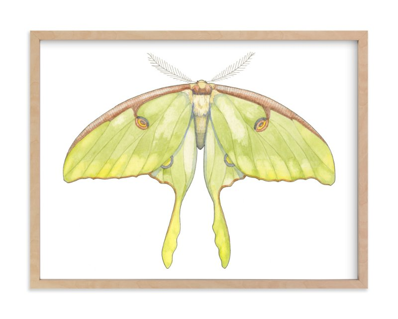 """""""Luna Moth"""" - Art Print by Natalie Groves in beautiful frame options and a variety of sizes."""