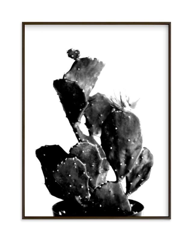 black cactus by Baumbirdy