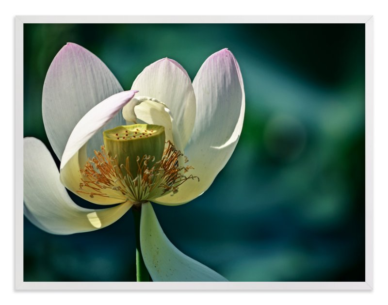 """""""Lotus No. 1 - Hello"""" - Art Print by Qing Ji in beautiful frame options and a variety of sizes."""
