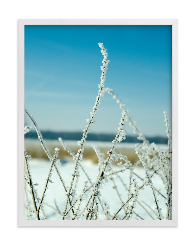 """""""Frosted Prairie Plant"""" - Art Print by Paul Hodges in beautiful frame options and a variety of sizes."""