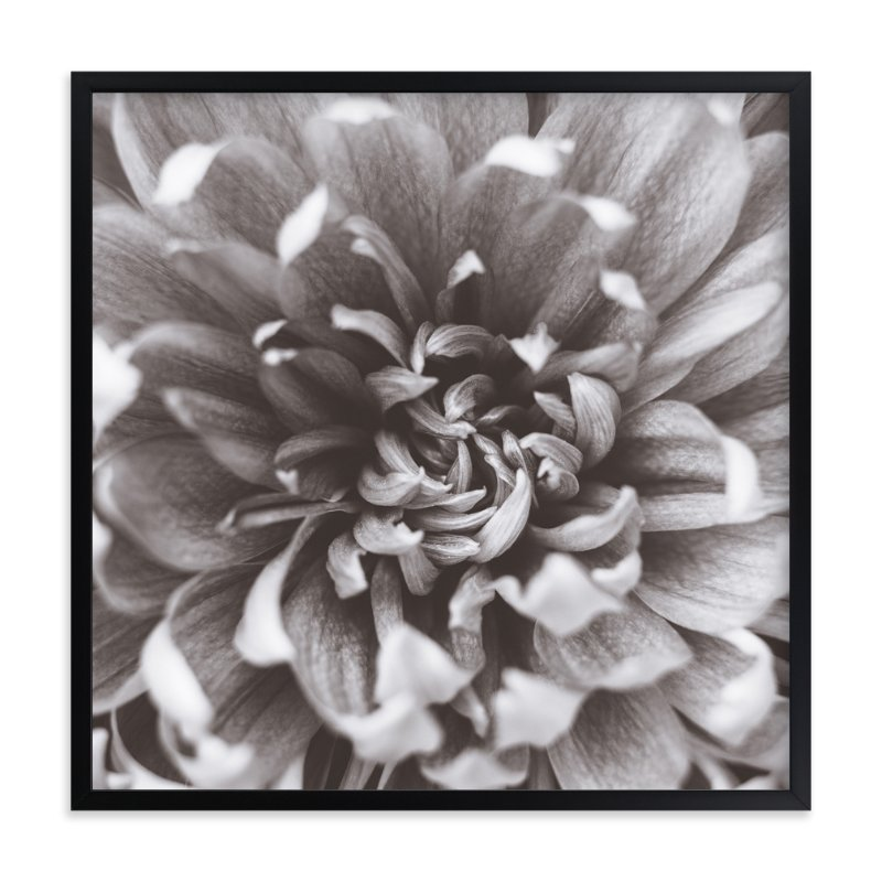 """Chrysanthemum III"" - Art Print by Lauren Marie in beautiful frame options and a variety of sizes."