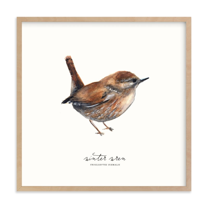 winter wren by Olivia Kanaley