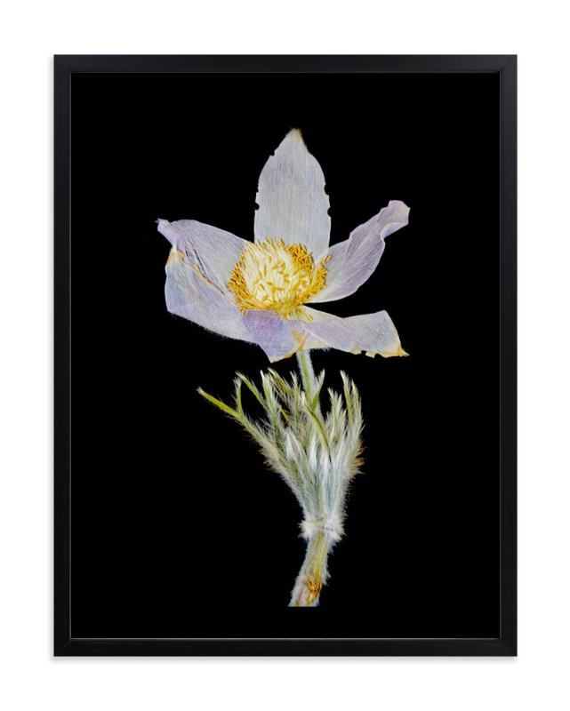"""Member 3"" - Art Print by Shannon in beautiful frame options and a variety of sizes."