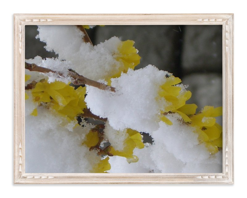 """Snow Flower"" - Art Print by Jan Kessel in beautiful frame options and a variety of sizes."